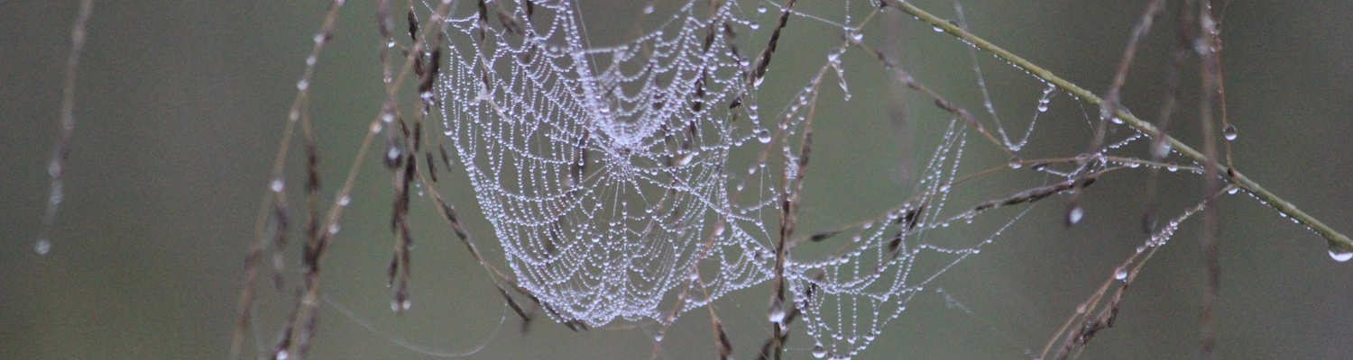 "A spider web encrusted with ""diamonds"" at Amohela ho Spitskop Country Retreat."