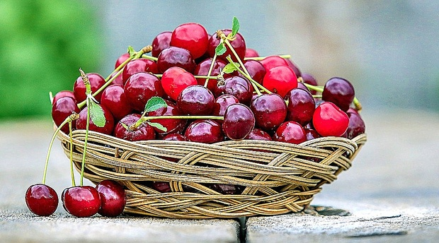 Delicious succulent fresh cherries grown in the Eastern Free State in the Ficksburg & Clocolan districts where Amohela ho Spitskop Country Retreat & Conservancy is siutated.
