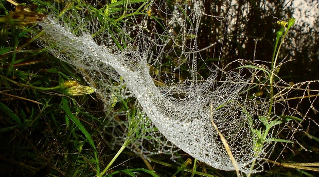 A diamond studded spider web at Amohela ho Spitskop Country Retreat & Conservancy between Ficksburg & Clocolan in the Eastern Free State